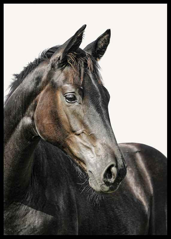 Brown Horse-2