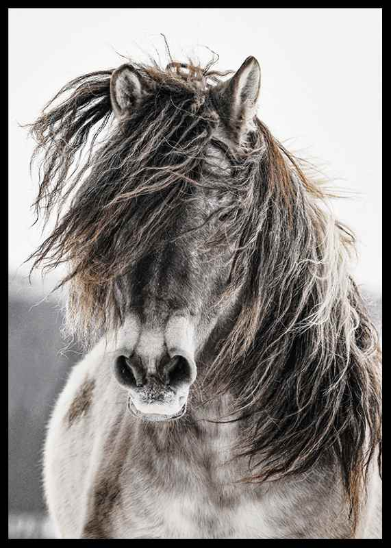 Wild Horse-2