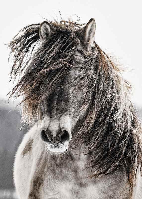 Wild Horse-3
