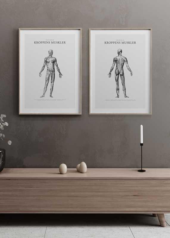 Kroppens Muskler Baksida-4