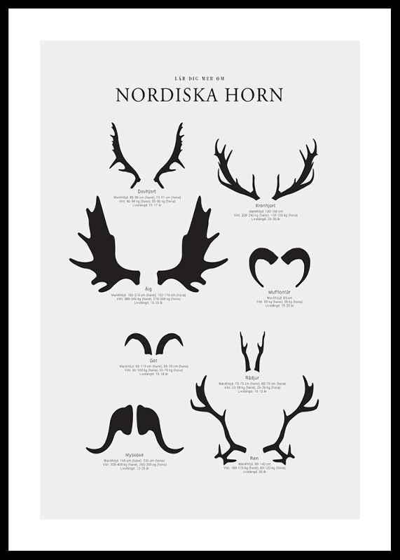 Nordiska Horn
