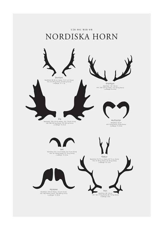 Nordiska Horn-1