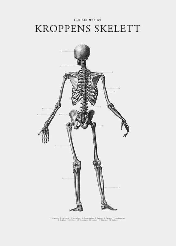 Kroppens Skelett-3
