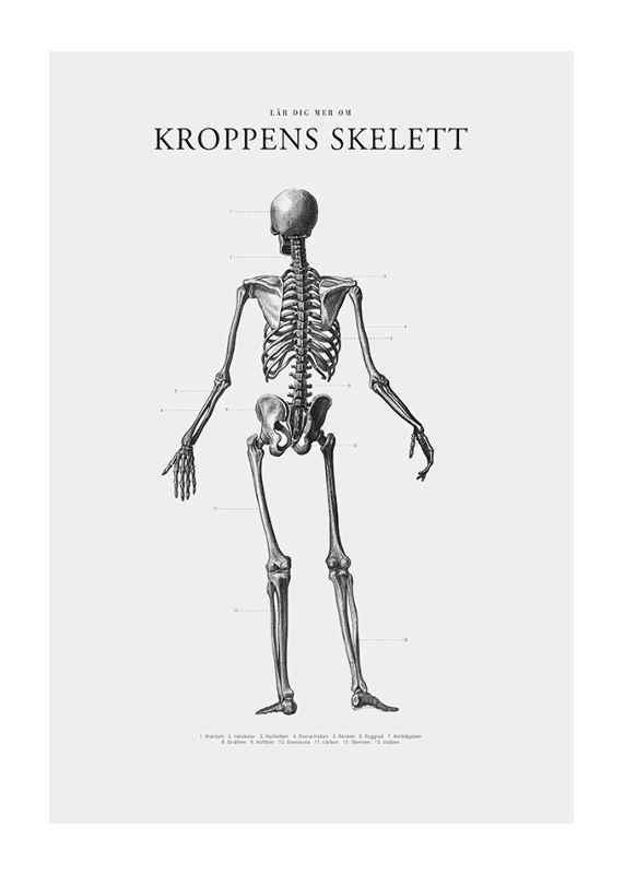 Kroppens Skelett-1