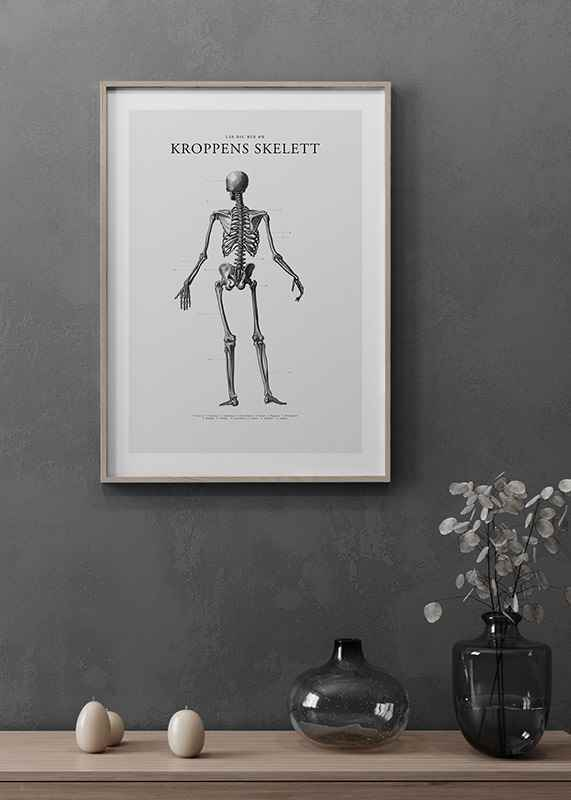 Kroppens Skelett-4