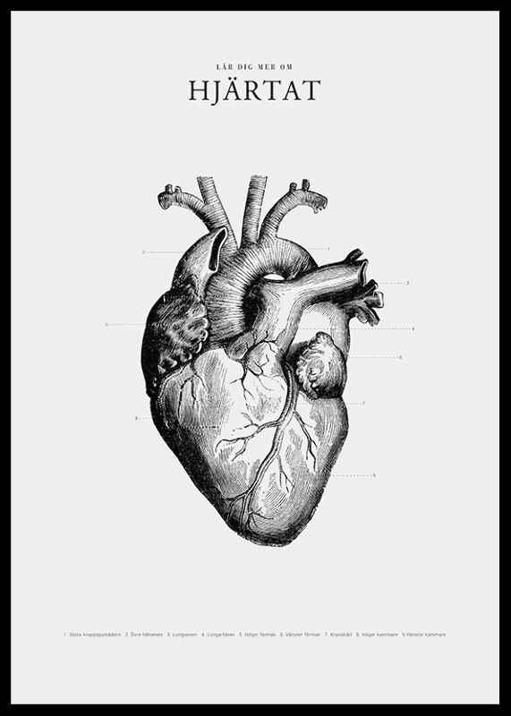 Hjärtat-2