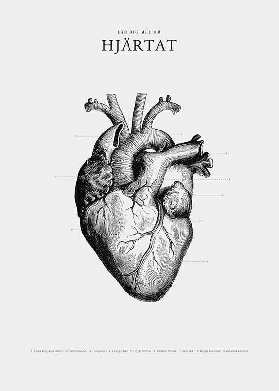 Hjärtat-3