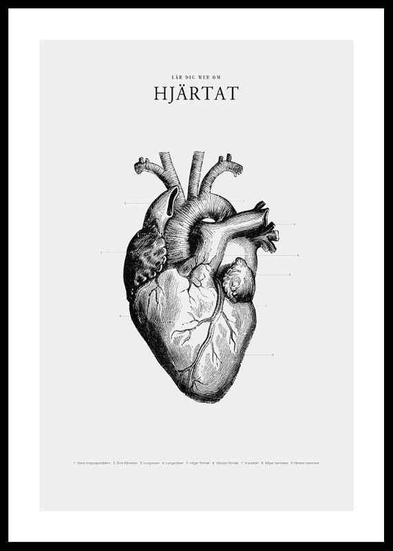 Hjärtat-0