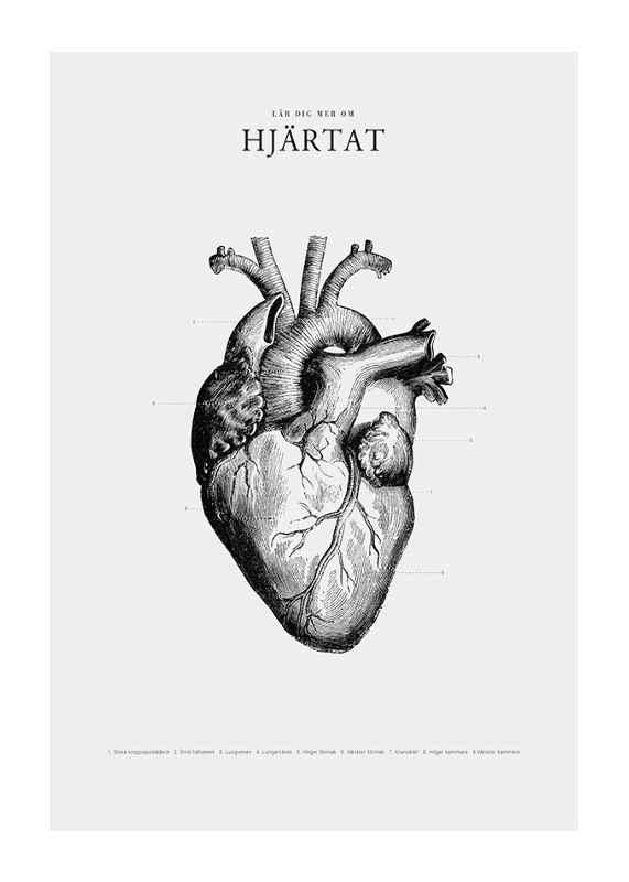 Hjärtat-1