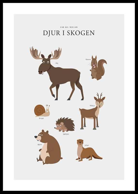 Djur I Skogen-0