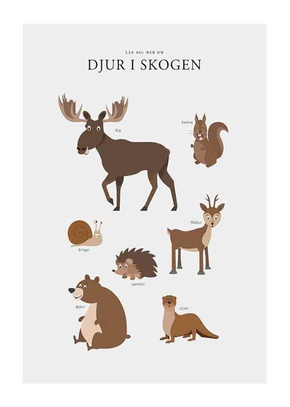 Djur I Skogen-1