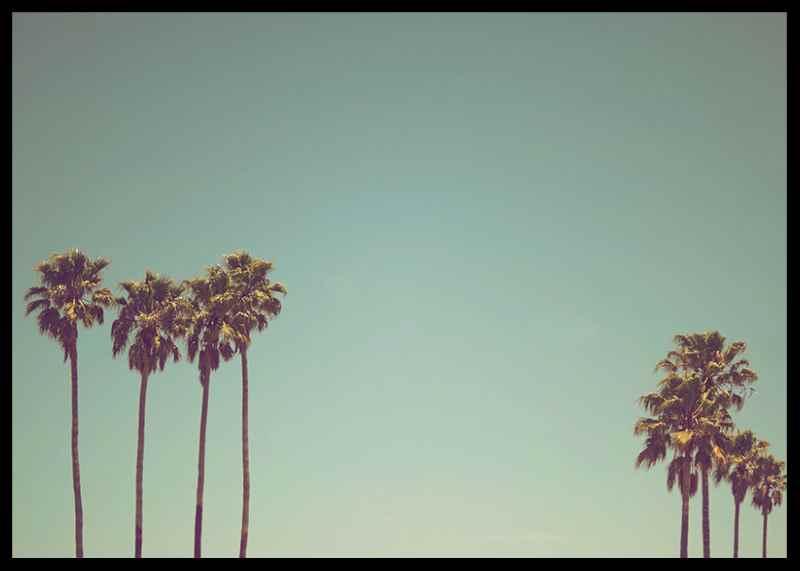 L.A Palms-2