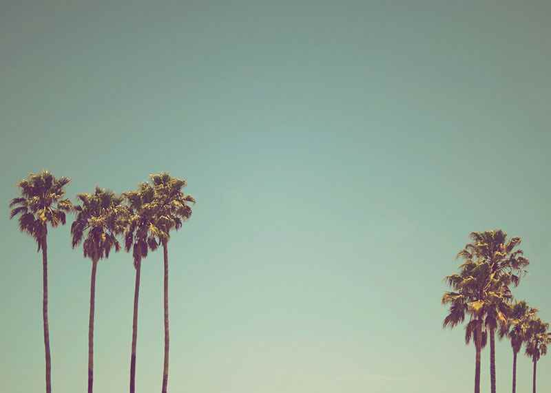 L.A Palms-3