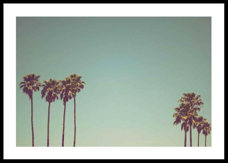 L.A Palms