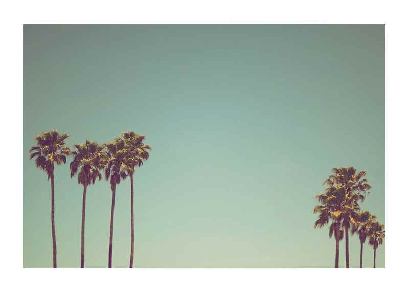 L.A Palms-1