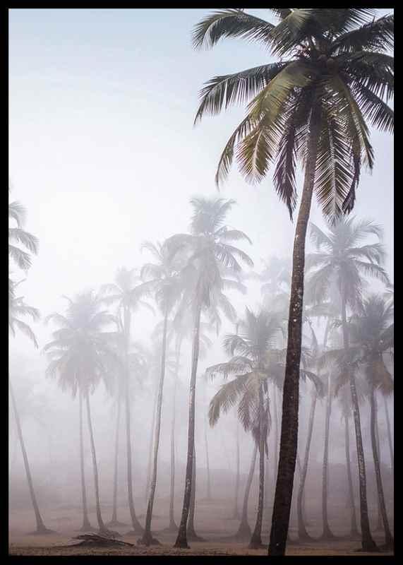 Palms In Haze-2