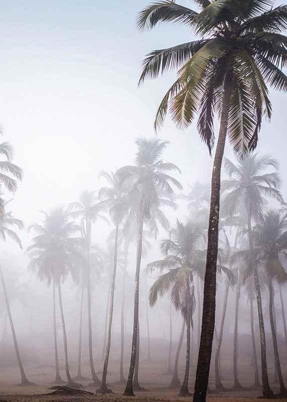 Palms In Haze-3