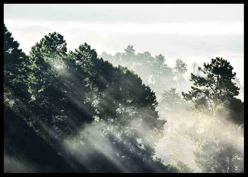 Sunlight Forest-2
