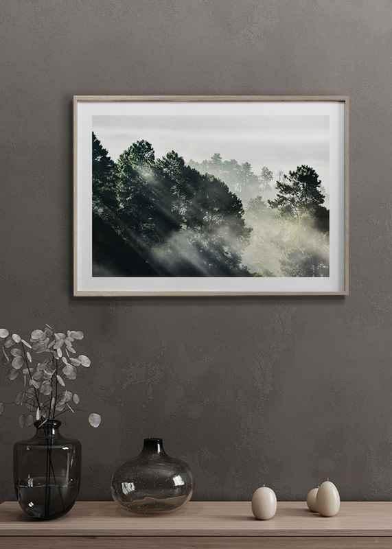Sunlight Forest-4