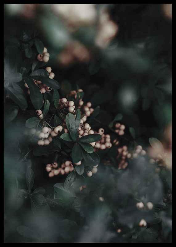 Forest Vegetation-2