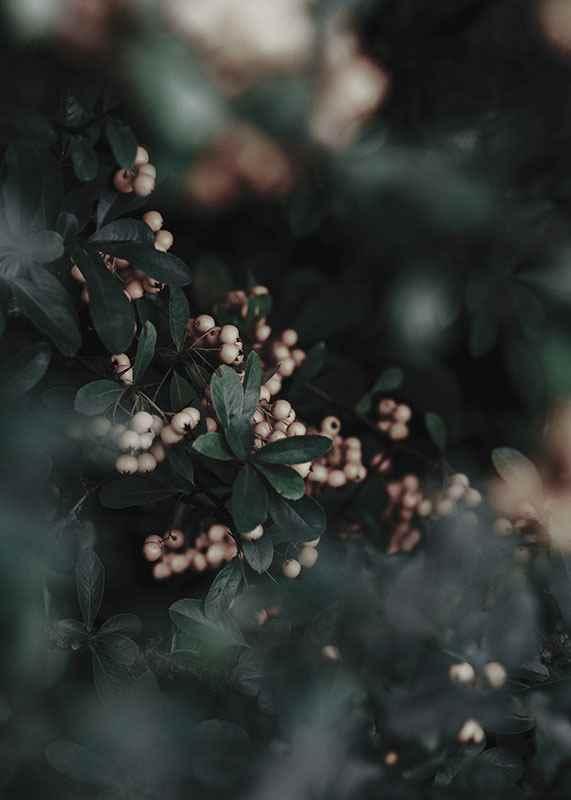Forest Vegetation-3