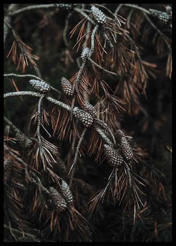 Tree Cones-2