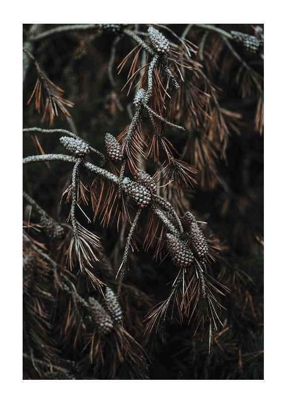 Tree Cones-1