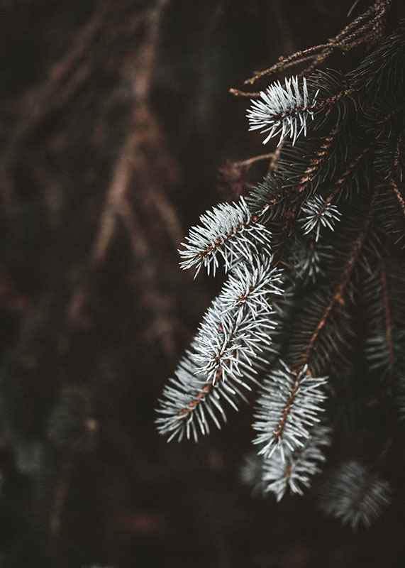 Fir Needle In White-3