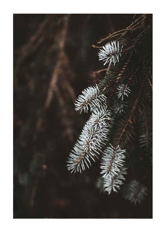 Fir Needle In White-1