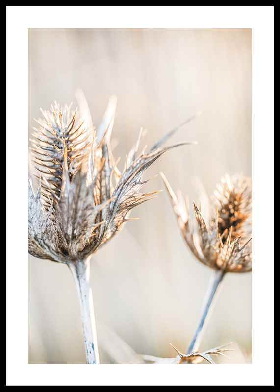 Dried Plants No1
