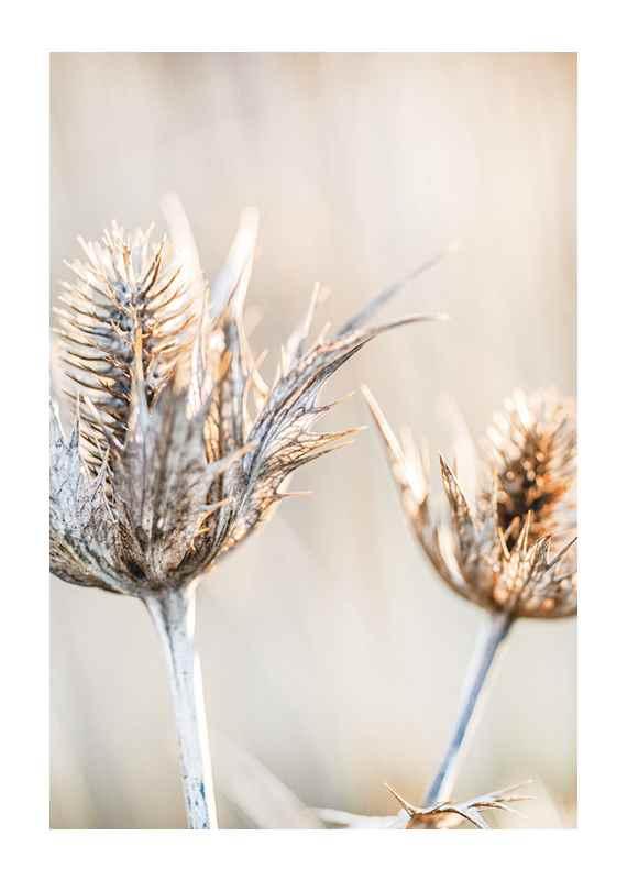 Dried Plants No1-1