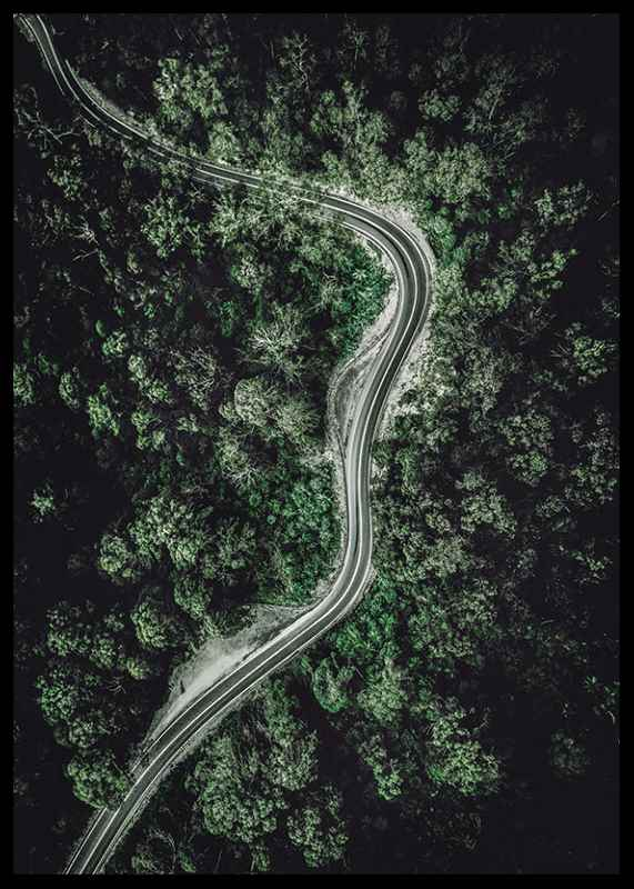 Forest Road-2