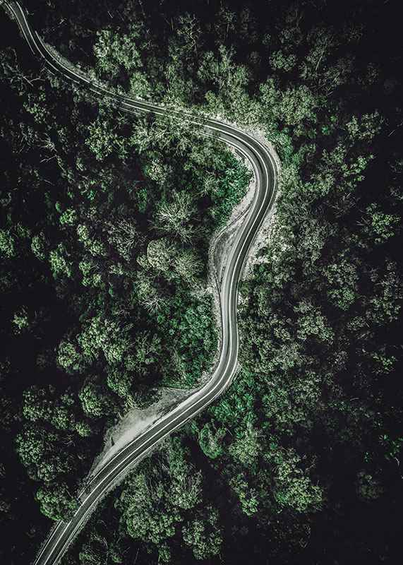 Forest Road-3