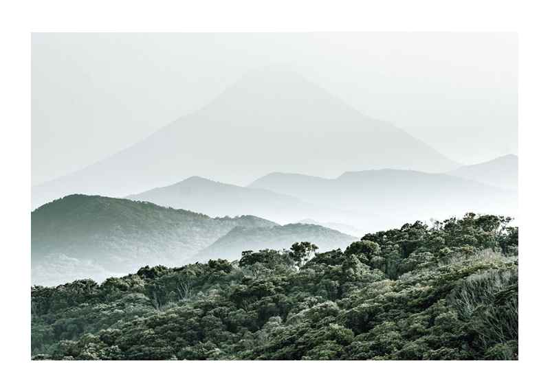 Mountain Forest-1