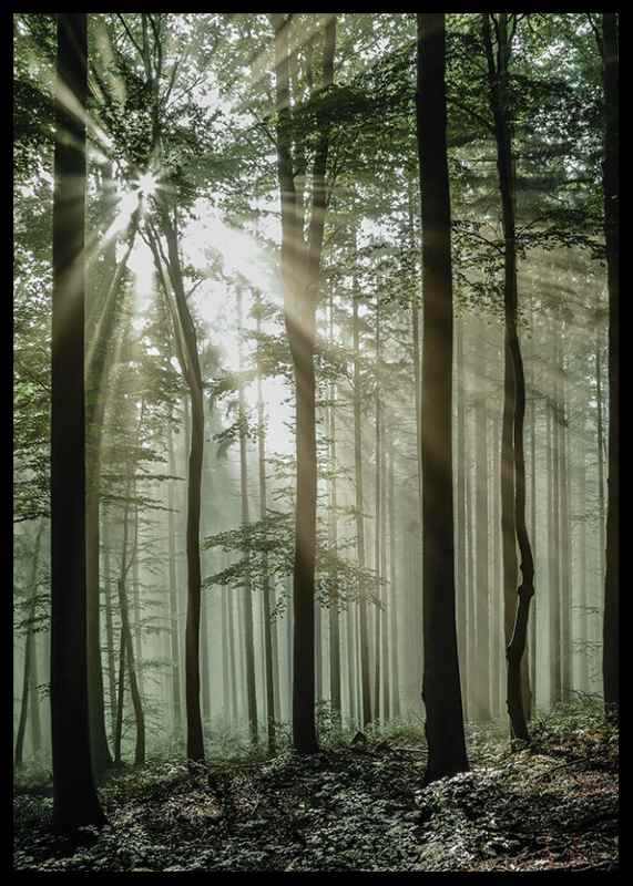 Light Through Trees-2