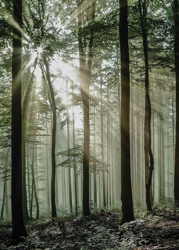 Light Through Trees-3