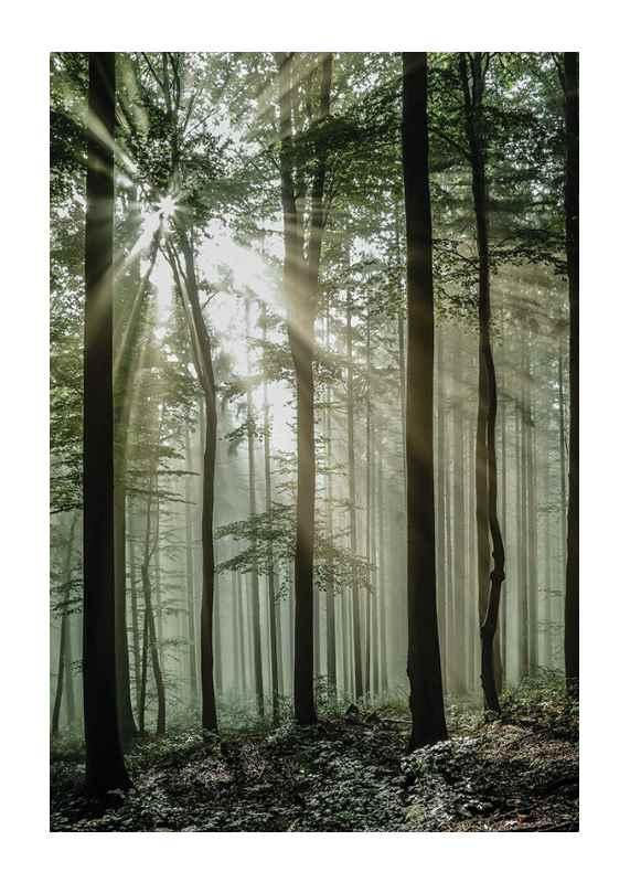 Light Through Trees-1