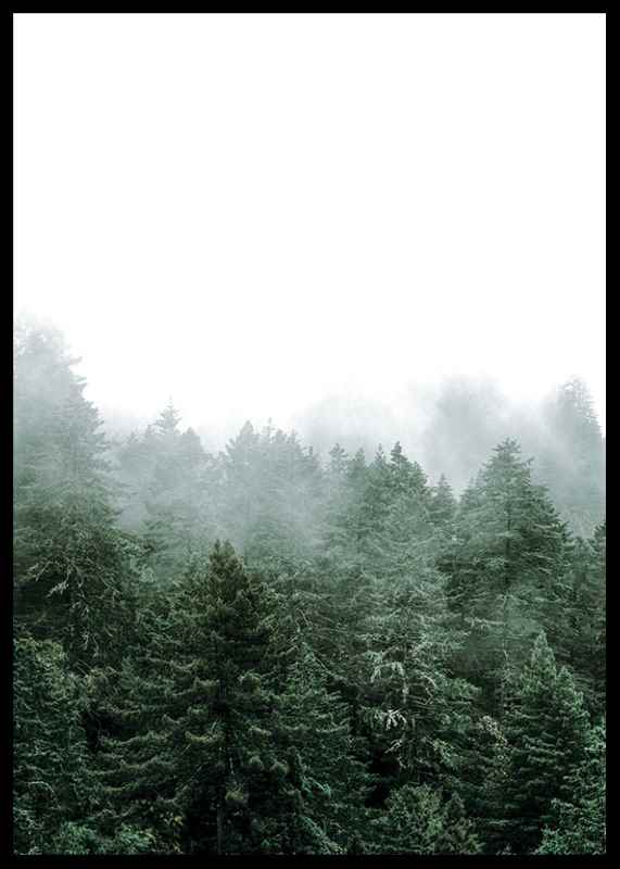 Misty Forest-2