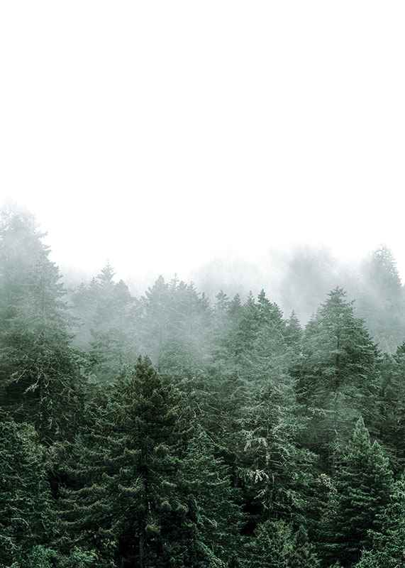 Misty Forest-3