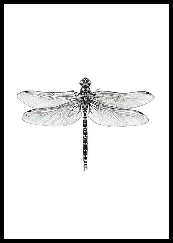Dragonfly-0