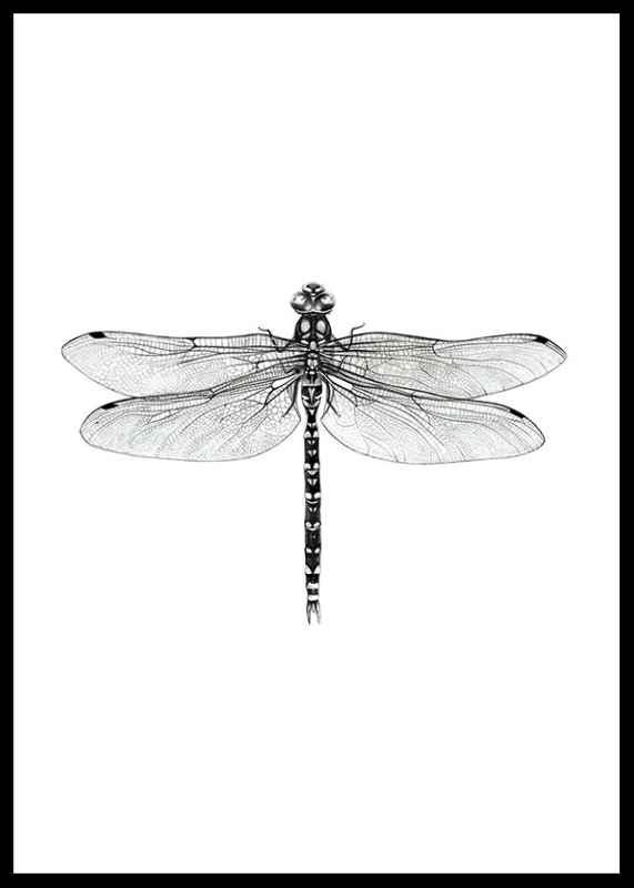 Dragonfly-0