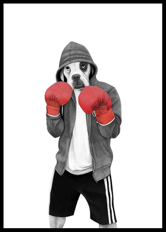 Street boxer-0