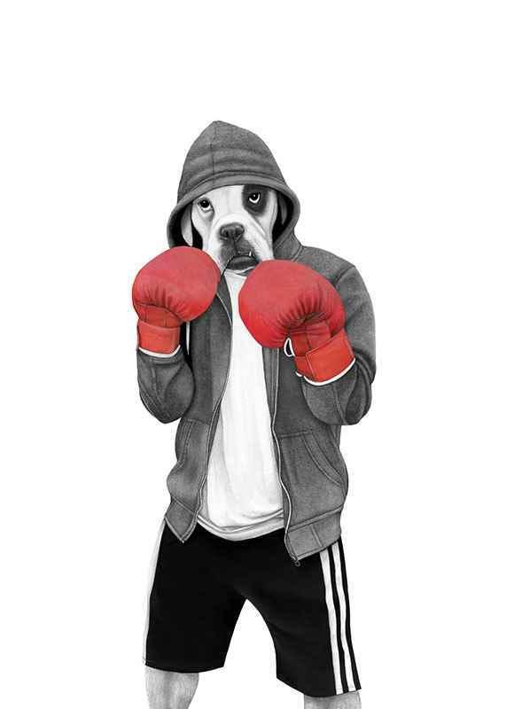 Street boxer-1
