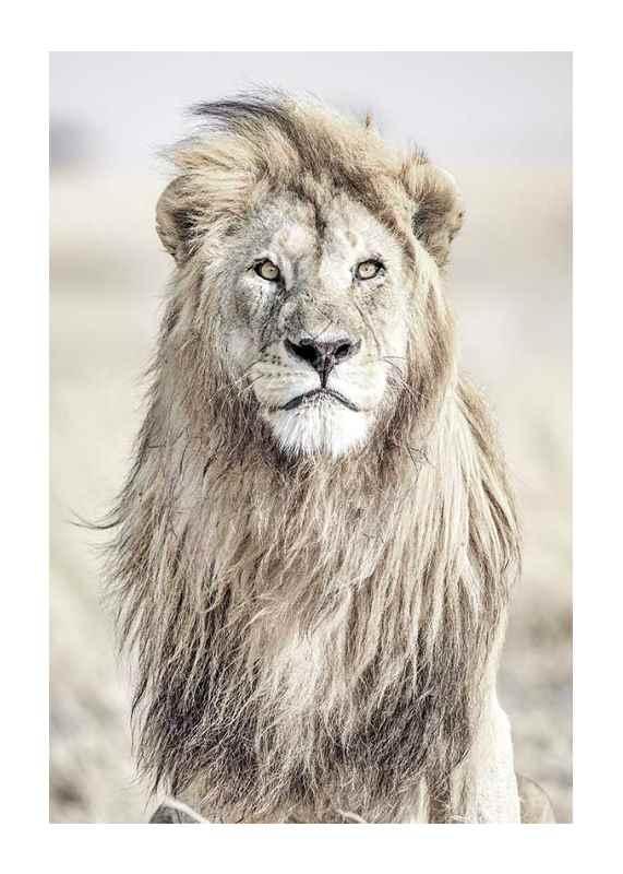 Majestic Lion Color-1