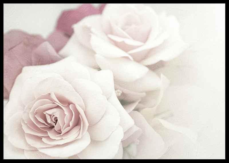Perfect Pair Roses-2