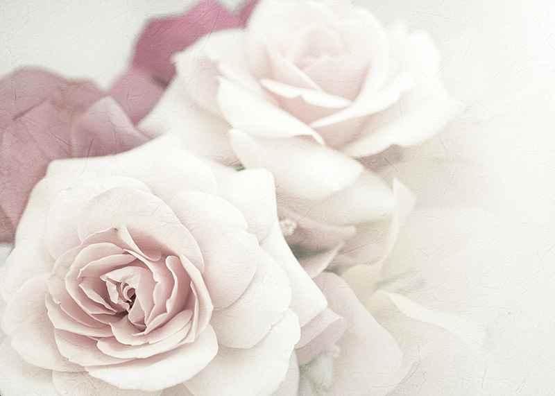 Perfect Pair Roses-3