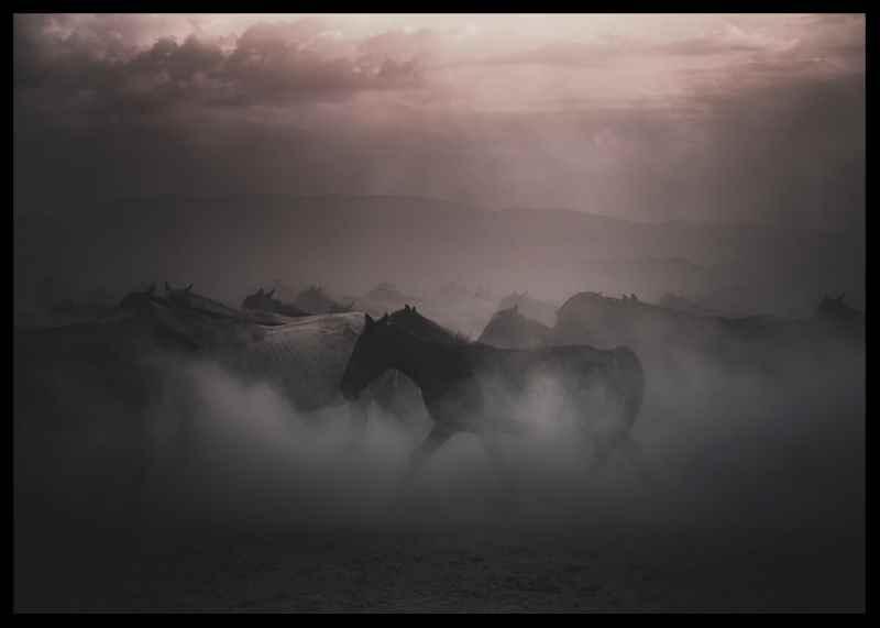 Sunset Horses-2
