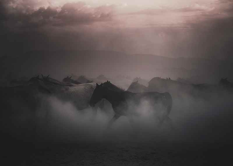 Sunset Horses-3