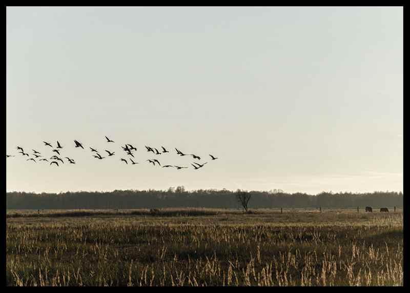 Birds Flyby-2