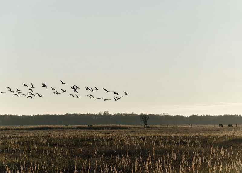 Birds Flyby-3